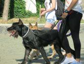 Выставка собак «Краса Кафы» пройдет в начале октября
