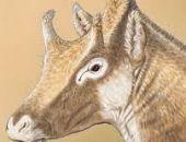 Археологи нашли в пещере в Крыму останки древних жирафа, дикобраза, верблюда и слона