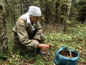 Вчера в лесу под Грушевкой спасатели нашли старушку, которая потерялась, собирая грибы