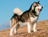 В Севастополе разгорается скандал из-за убитой на прогулке собаки