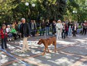 Редкие собаки пришли на выставку в Феодосии (видео)