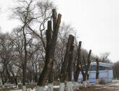 Прокуратура обязала администрацию крымского города вести реестр зеленых насаждений