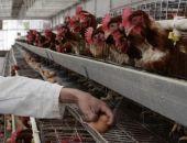 Одна из птицеферм в Крыму оказалась на грани закрытия