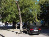 В Феодосии появились «меченые» деревья:фоторепортаж