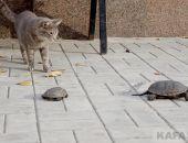 Коттебель – страна котов, и не только:фоторепортаж