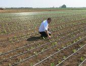 Власти Крыма планируют в 2019 году увеличить площадь орошаемых земель до 20 тыс. га