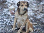 В Крыму спасли собаку, которая упала со скалы на уступ и провела там двое суток (фото)