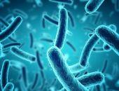 В Китае обнаружили два новых вида устойчивых к антибиотикам бактерий