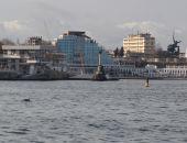 В Севастопольскую бухту заплыли дельфины