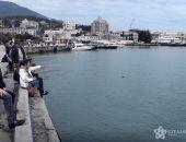 В Крыму дельфины заплыли в порт:фото
