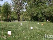 Симферопольские СМИ остались без деревьев:фото