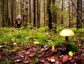 В Кировском районе женщина, собирая грибы, заблудилась в лесу