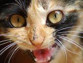У кота из Наниково выявили бешенство