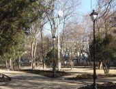 В Симферополе в сквере Тренева вандалы сломали 10 деревьев
