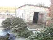 В Крыму у наркоторговца изъяли конопли на миллион:фото+видео