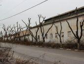 На Симферопольском шоссе обрезали деревья