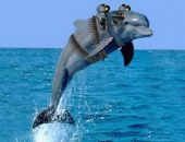 В Крыму провели учения с боевыми дельфинами