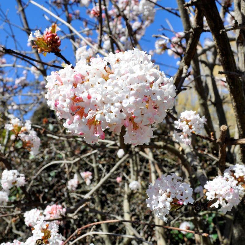 весна в крыму когда начинается тянет больше