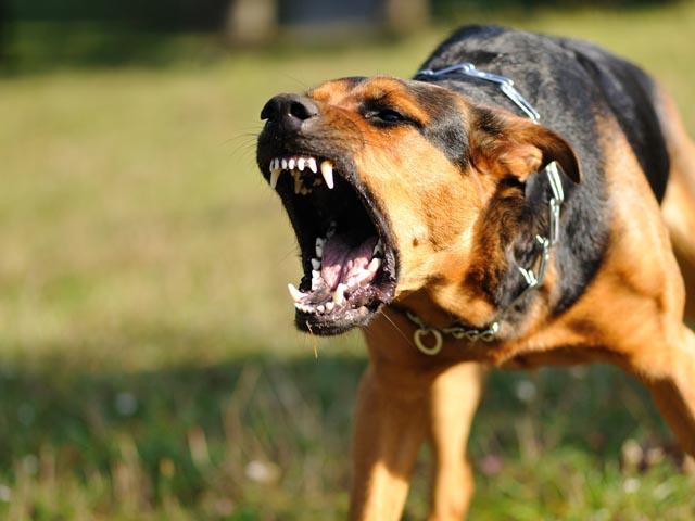 В Екатеринбурге полицейские застрелили собаку, которая охраняла пьяного хозяина