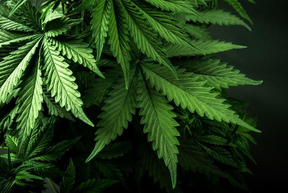 Марихуана в феодосии марихуаны на организм