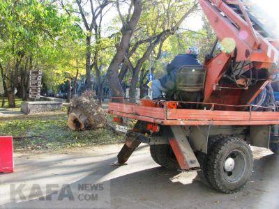В Феодосии на Армянской пилят деревья (видео)