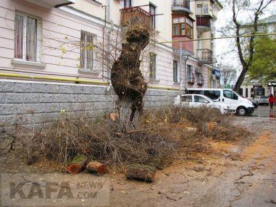 Возле феодосийского ЗАГСа спилили деревья