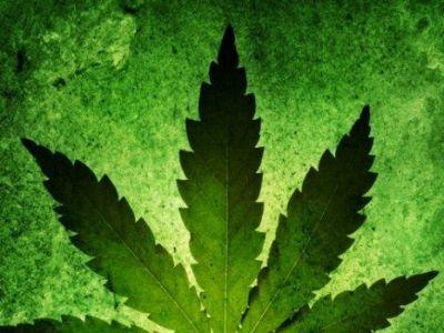 Можно ли курить коноплю при диабете выращивание конопли в керамзите