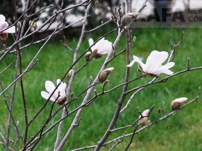 В Феодосии зацвели редкие растения